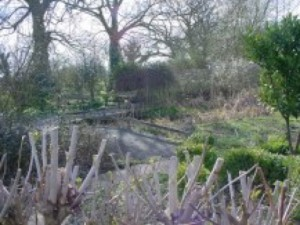 The pond and wildlife garden